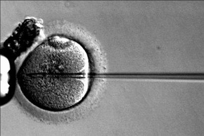 La fecundación 'in vitro' consigue menos de un 8% de embarazos