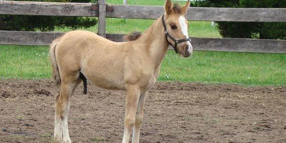 Argentina se convirtió en el primer país de Latinoamérica en clonar con éxito un caballo