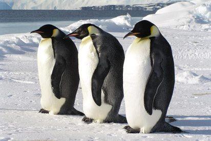 Google Street View llega a la Antártida