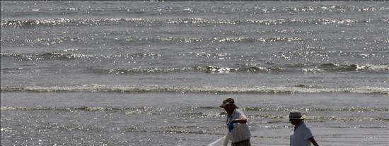 Un estudio prueba que el crudo vertido por BP entró en la cadena alimenticia