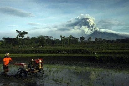 Hallan nuevos cadáveres en el volcán Merapi y los muertos aumentan a 250
