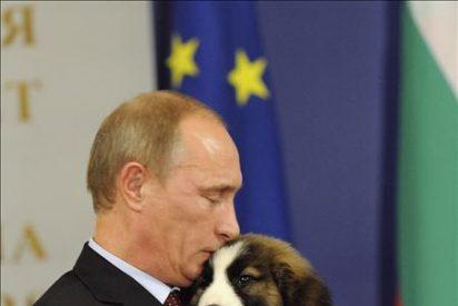 Putin invita a los rusos a que elijan un nombre para su nuevo perro