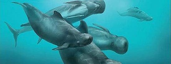 Descubren un delfín con cabeza de balón