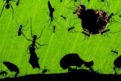 Disfrute de esta fotografía de hormigas porque es la mejor imagen de 2010 sobre naturaleza salvaje