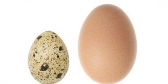 huevo codorniz y de gallina