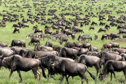 Todo lo que debes saber si vas a visitar Kenia