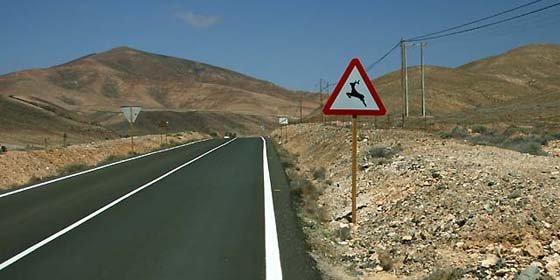 El Gobierno cántabro deberá pagar 2.000 euros por los daños causados a un coche por un ciervo