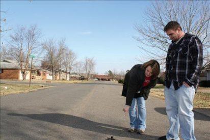 Varios estados abren una investigación por la desconcertante muerte de pájaros