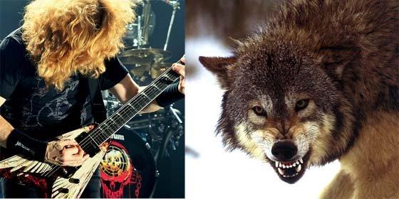 Adolescente espanta manada de lobos con tema musical de la banda Megadeth