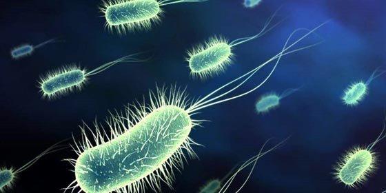 """Los """"caza bacterias"""" mexicanos"""