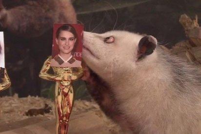 La zarigüeya bizca Heidi predice que Natalie Portman se llevará el Oscar