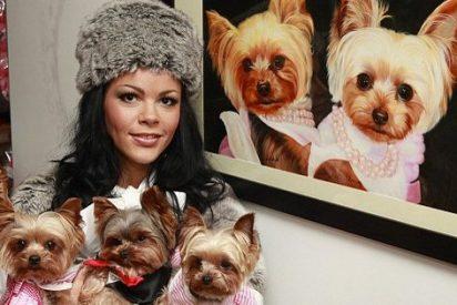 Una mujer se gasta 117.000 euros en caprichos para sus tres yorkshire terrier