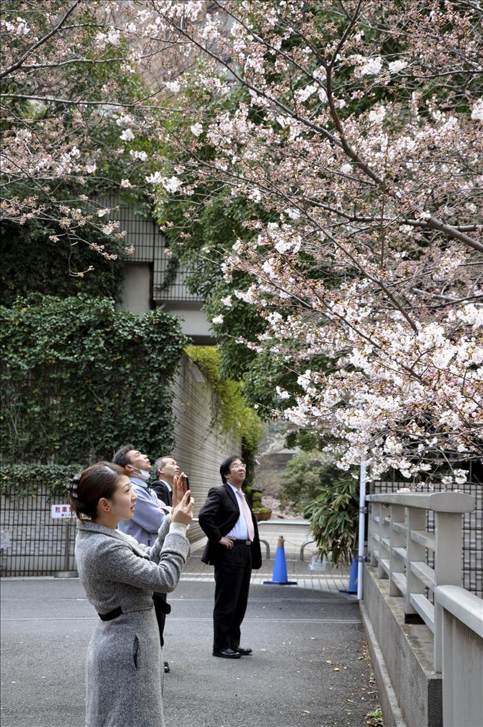 """La llegada del """"sakura"""" a Tokio pone una nota de optimismo tras el terremoto"""