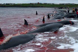Los delfines solidarios no abandonan nunca a un compañero moribundo