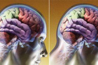 """La gente distraída tiene """"mucho cerebro"""""""
