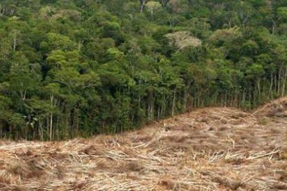 Asesinan a una pareja que luchaba contra la tala ilegal de árboles en la Amazonía