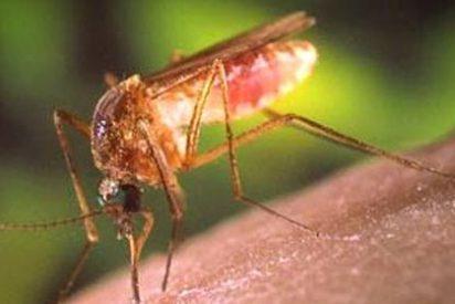 Descubren por azar un súper repelente de insectos