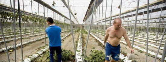 A la izquierda la situación de la huerta española le importa literalmente un pepino