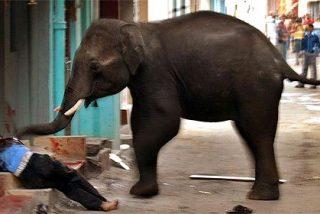 Dos elefantes asesinos entran en la ciudad y atacan y matan a la gente