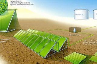 Energía: Hojas de árbol artificiales para crear combustible del sol