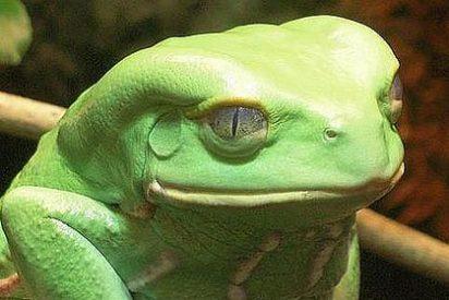¿Está la solución al problema del cáncer en la piel de esta rana?