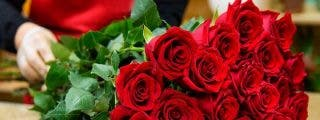 Sin Rosas no hay San Valentín