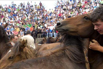 Los caballos de Sabucedo derrocharon fuerza en el segundo curro de la Rapa 2011