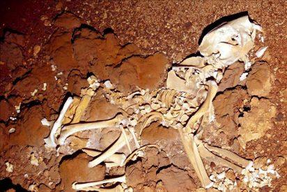 Descubren los restos de un marsupial gigante de hace 50.000 años en Australia