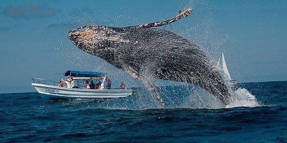 Las ballenas grises sobrevivieron a la Edad de Hielo cambiando de dieta