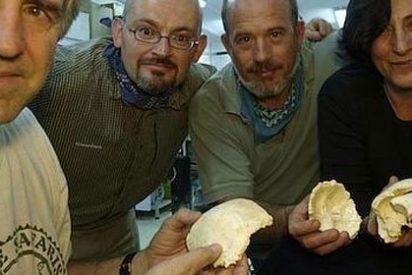 Descubren en Atapuerca anfibios y reptiles fósiles con más de 300.000 años