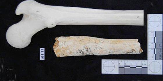 Encuentran un fémur de origen humano en Atapuerca