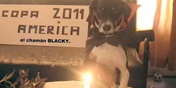 """Blacky, el """"perro vidente"""", causa furor en la Copa América de Argentina"""