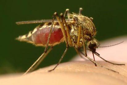 ¿Sabes cómo combatir el mosquito 'tigre'?