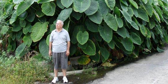 Las ñameras de la isla de La Palma