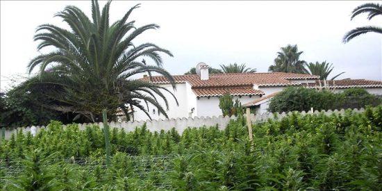 Los Mossos decomisan 400 plantas de marihuana en Tarragona