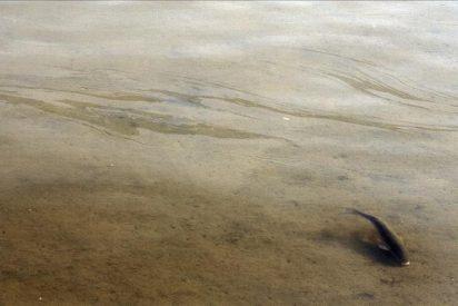 Siguen los trabajos para limpiar la ría de O Burgo tras el vertido de queroseno