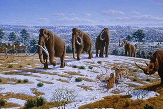 La ciencia exculpa a los humanos: No causaron la extinción de los mamuts