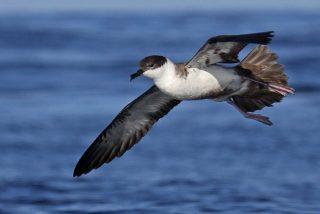 La caza ilegal mata cada año en España a cuatro millones de aves