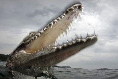Combate entre el cocodrilo gigante y la serpiente más grande del mundo