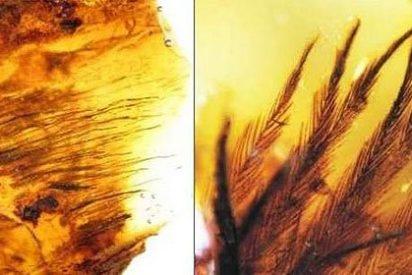 Hallan plumas de dinosaurio de hace 70 millones de años