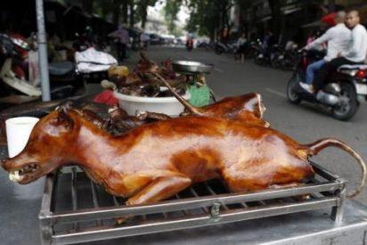 Internet frena un festival chino que tortura y come perros