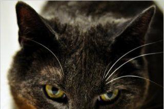 Los gatos asilvestrados han contribuido a la extinción del 14% de los vertebrados insulares