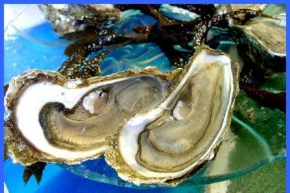 La ostra, en su versión gratinada