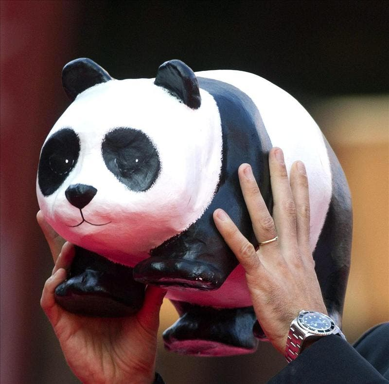 WWF, el icónico oso panda que lleva 50 años luchando por salvar el planeta