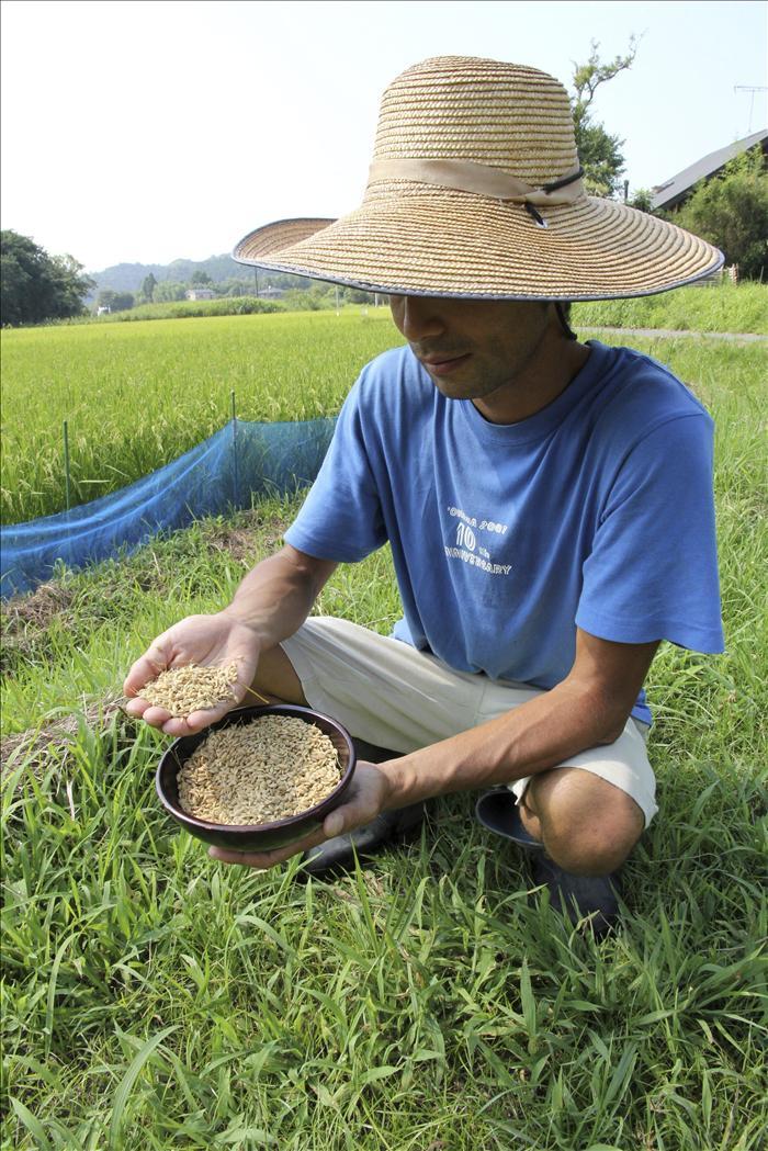 Aumentan a más de 4.000 las granjas que no podrán vender arroz en Fukushima