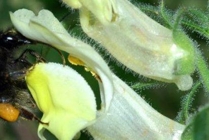La Eurocámara reclama medidas urgentes para proteger a las abejas