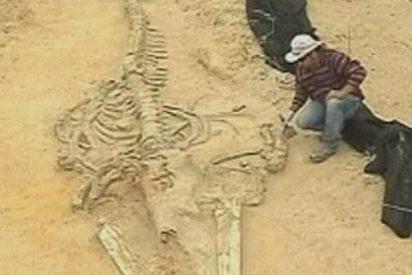 El mayor cementerio de ballenas del mundo está en Chile