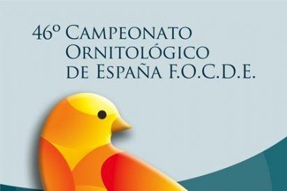 Talavera vuelve a ser centro de atención con la celebración del 46º Campeonato Ornitológico