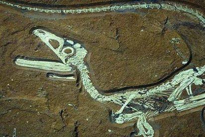 Descubren en Mongolia un nido con 15 crías fósiles de dinosaurio