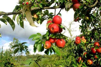 Corona de manzanas al té matcha
